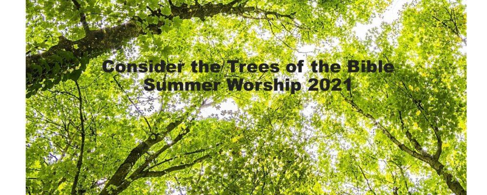 Summer 2021 trees 1